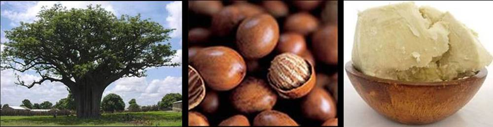 noix-beurre-karite-bio-agoji-david-hervy-neil-leo (16)